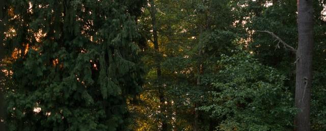 DSCF2132 trees